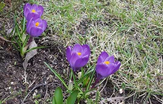 Wiosenne inspiracje dla dzieci